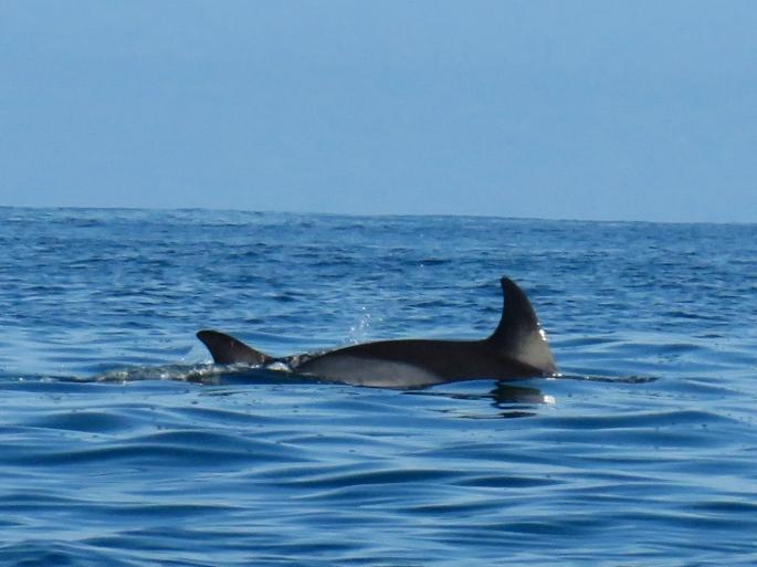 Bude Dolphin