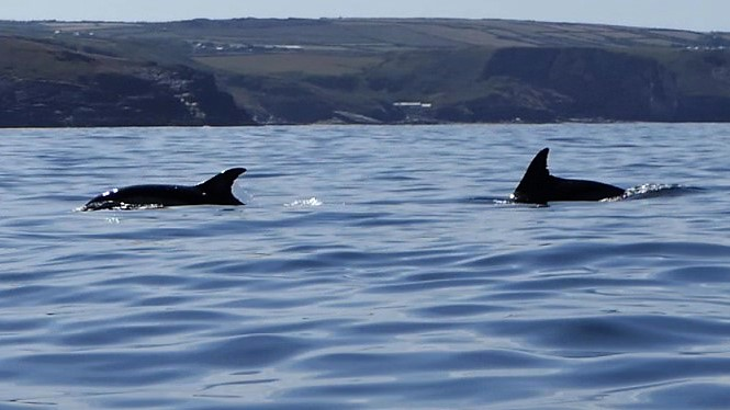 Boscastle Dolphins 1