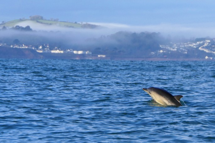 dolphin foggy coast