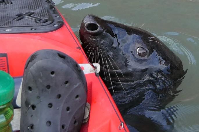 croc n seal