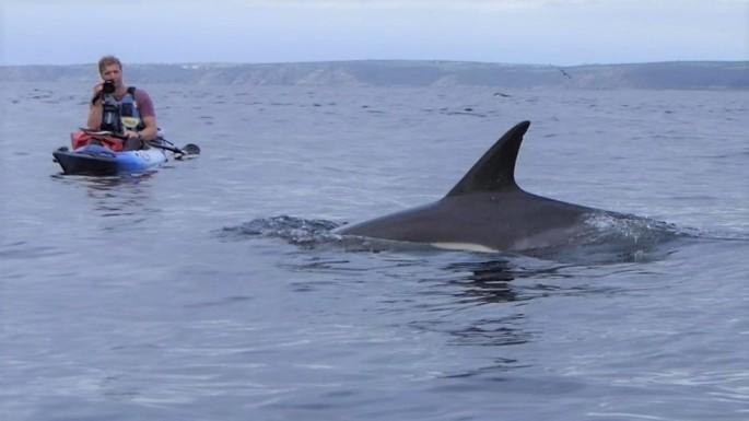 josh dolphin 9
