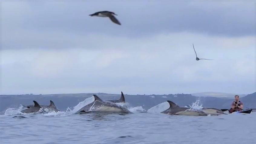 josh dolphins 5