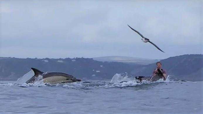 josh dolphins 6