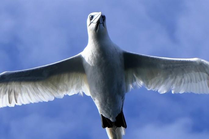 gannet mugshot