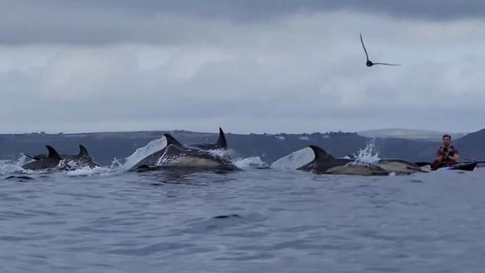 josh dolphins 10