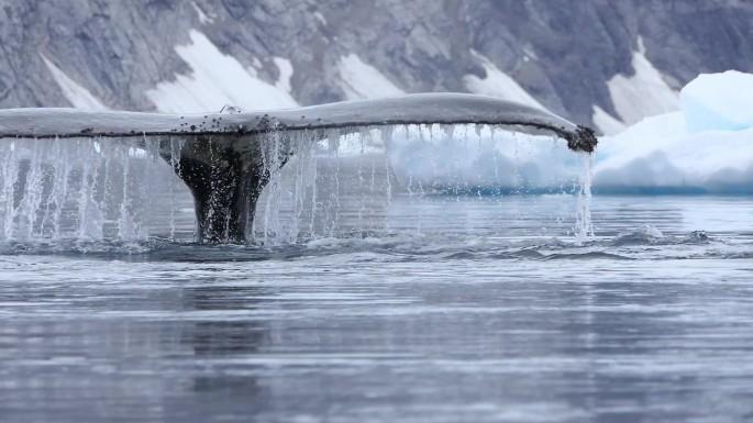 humpback pair slomo_Moment