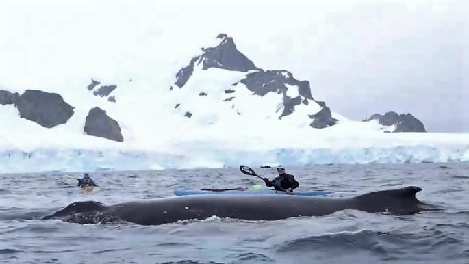 humpback!