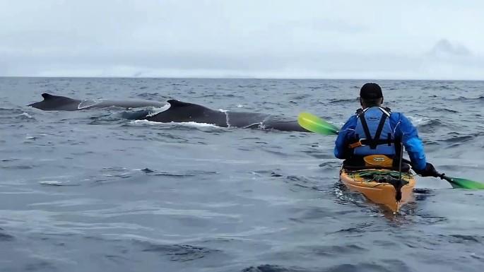 john humpback pair