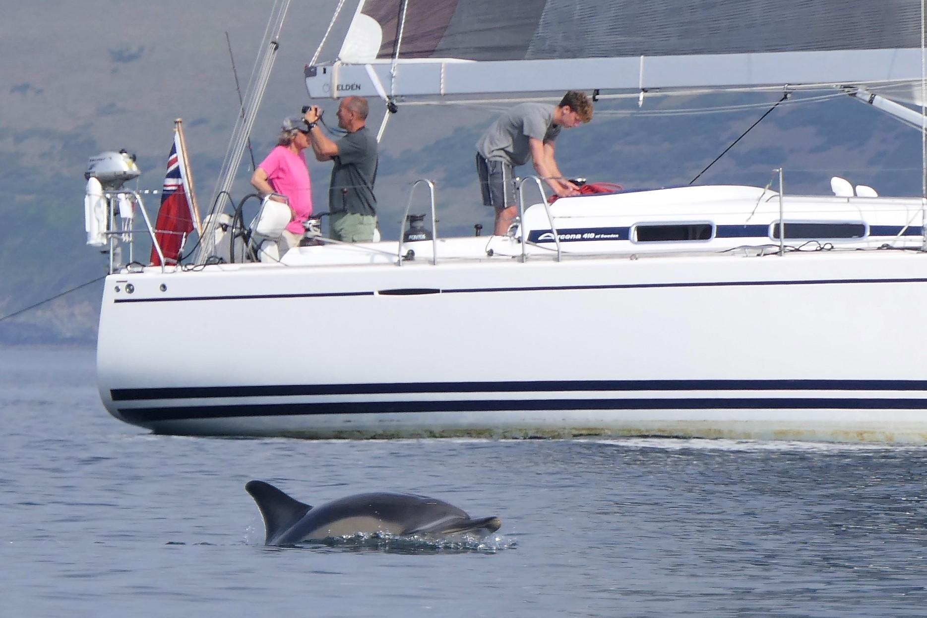 looe dolphin